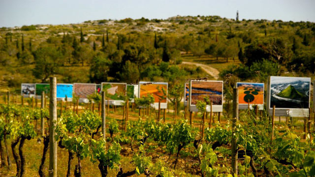 """PHOTO: """"Art de Vivre"""" in the Languedoc"""