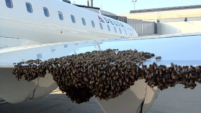 PHOTO: A beekeeper says he had to be called in to gather up a swarm of thousands of bees that delayed a Delta Air Lines Inc. flight from Pittsburgh International Airport to New York.