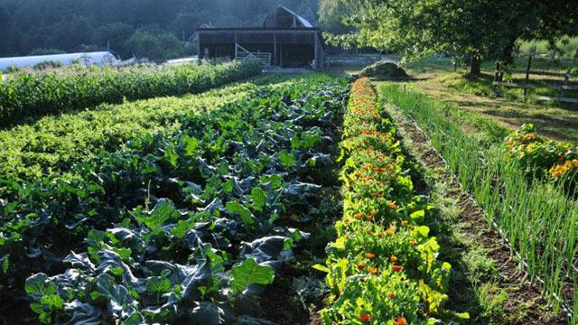 PHOTO: A Luxury Farm Stay at Foxglove Farm