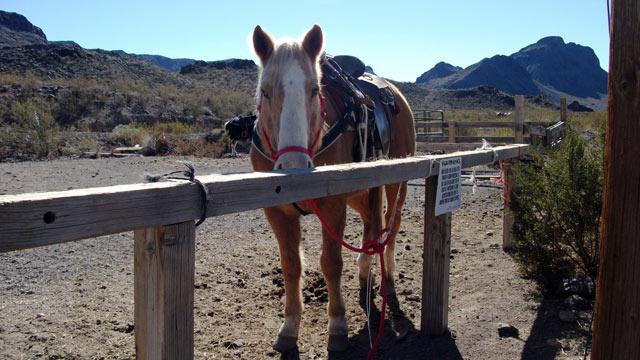 PHOTO: Oatman Stables, Oatman, AZ