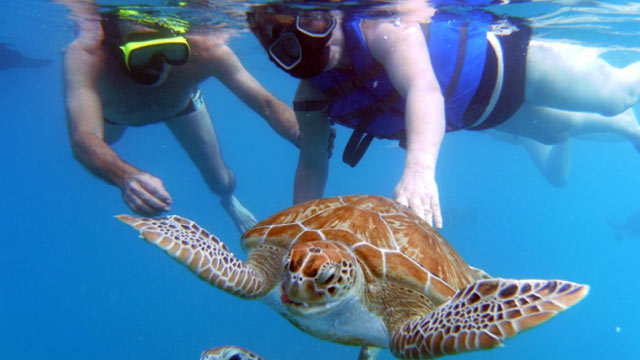 Best Places To Swim With Animals Abc News
