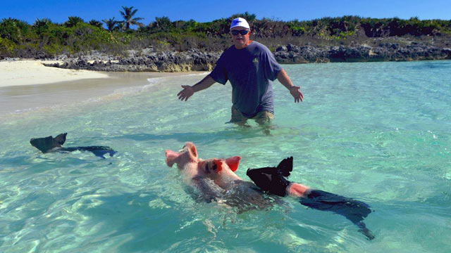 PHOTO: Swim with Pigs, Exumas