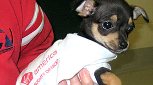 Virgin America, San Francisco Animal Care and Control and the ASPCA Initiate Chihuahua Airlift San Francisco