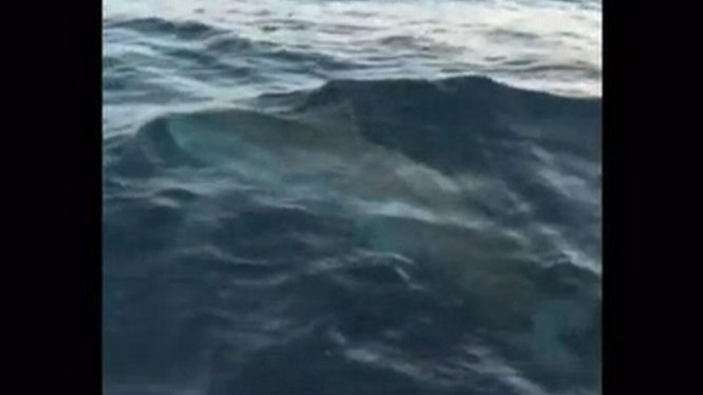 VIDEO: Canadian angler battled with massive shark for three and a half hours before letting it go.