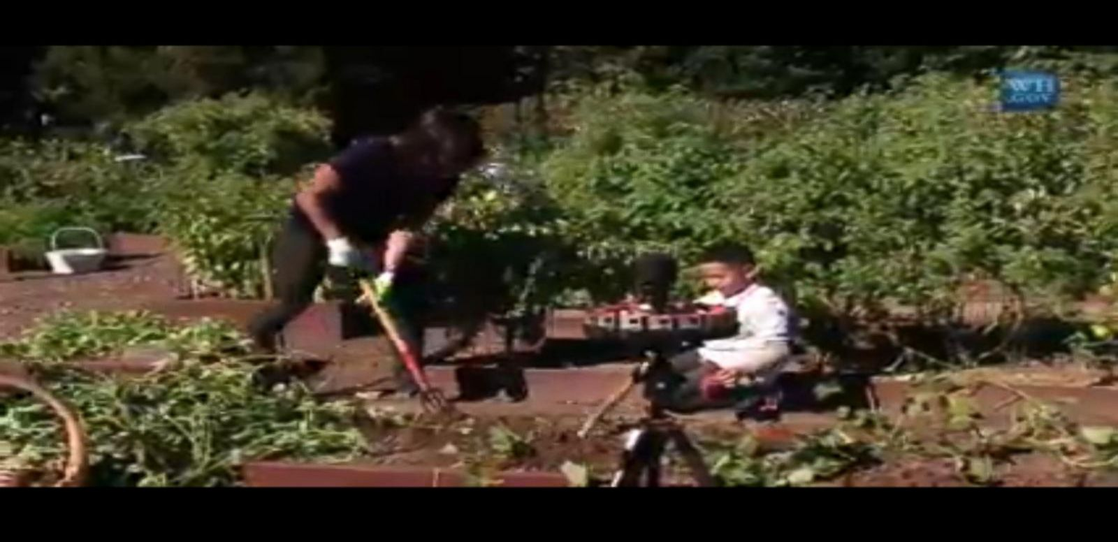 VIDEO: Annual Harvest of the White House Kitchen Garden