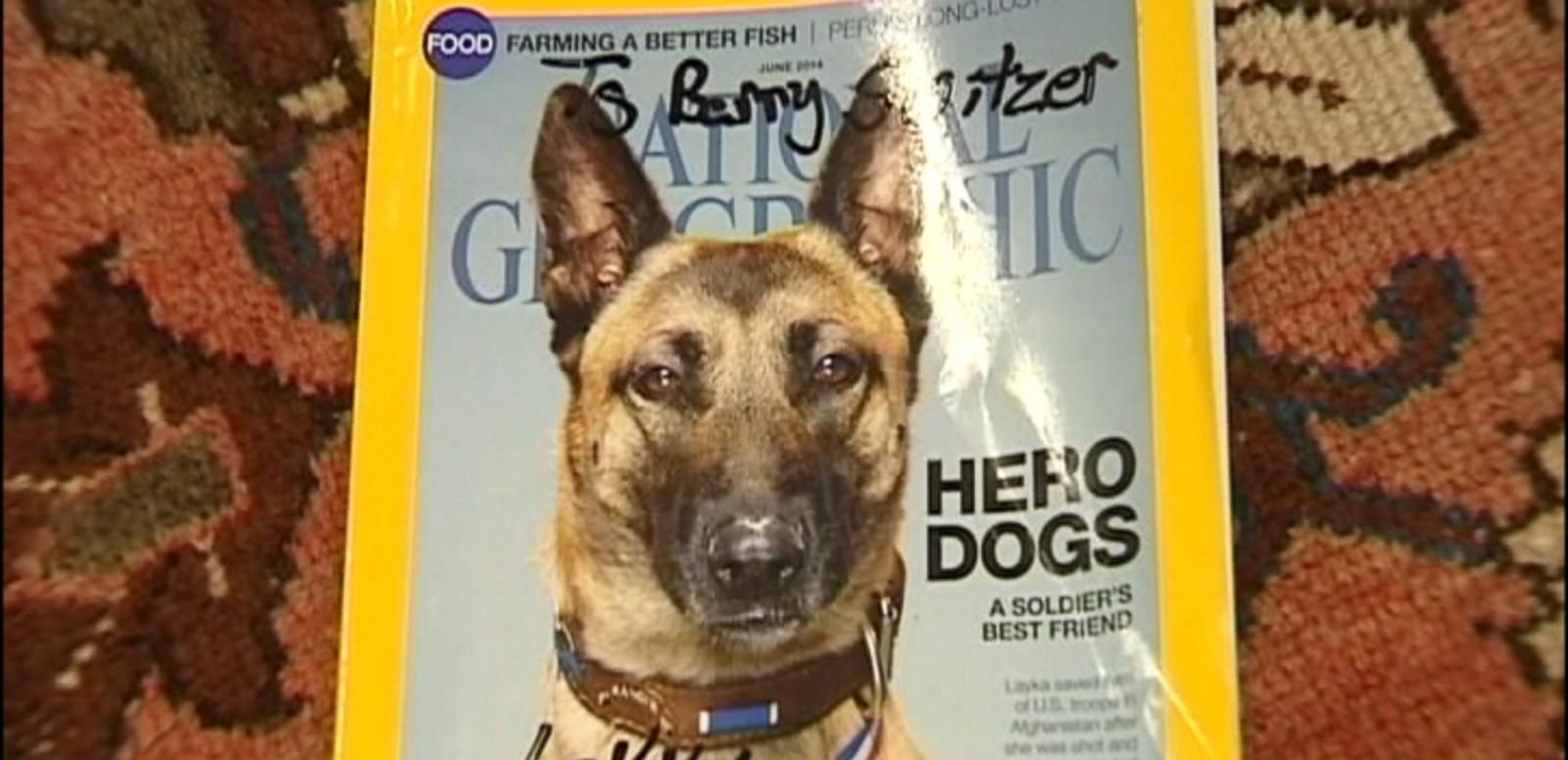 VIDEO: Hero Military Dog That Saved Unit in Afghanistan Is Getting Heroes of Her Own