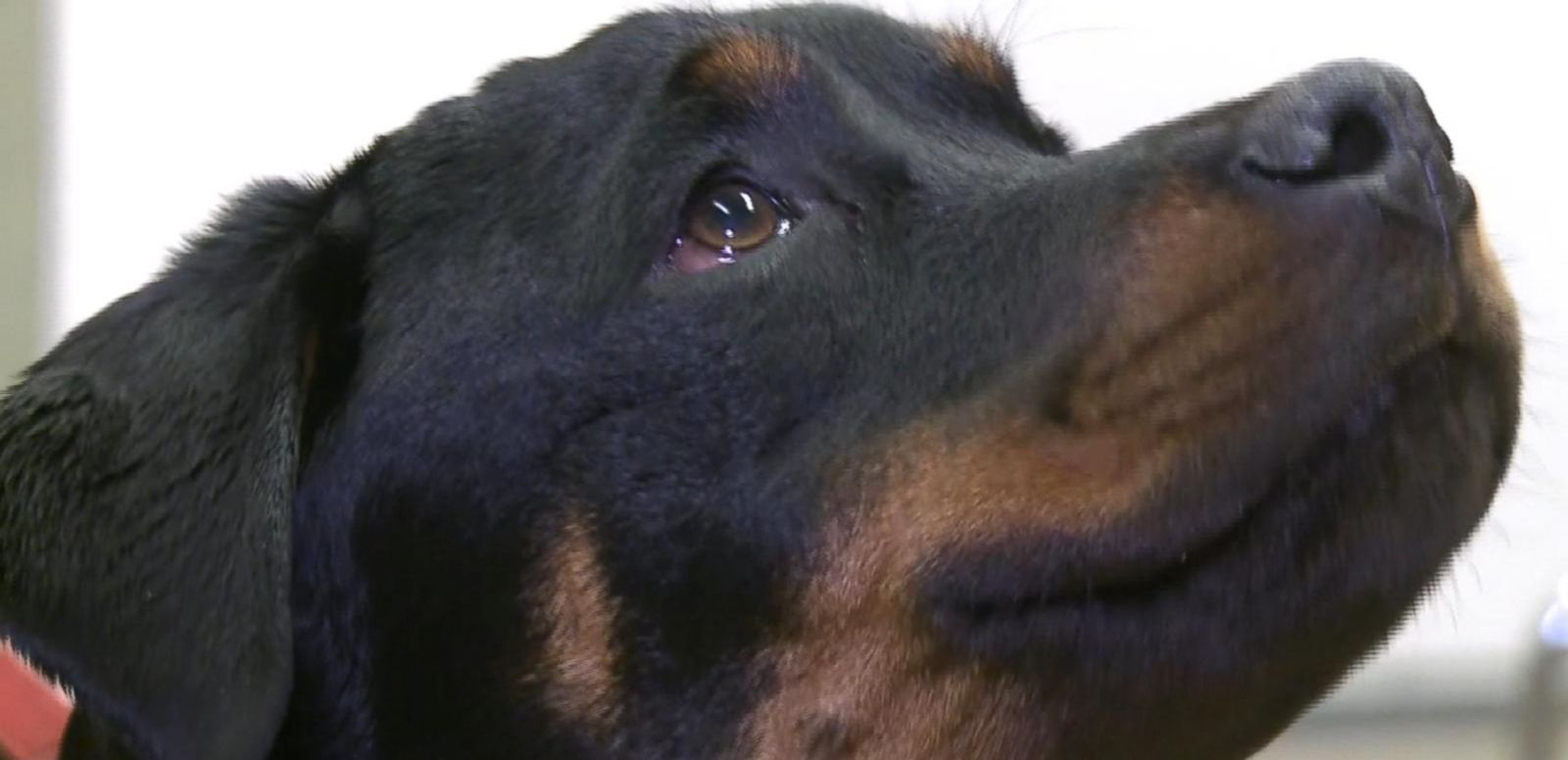 Veterinarians Treat Dog Who Was Hit By Car