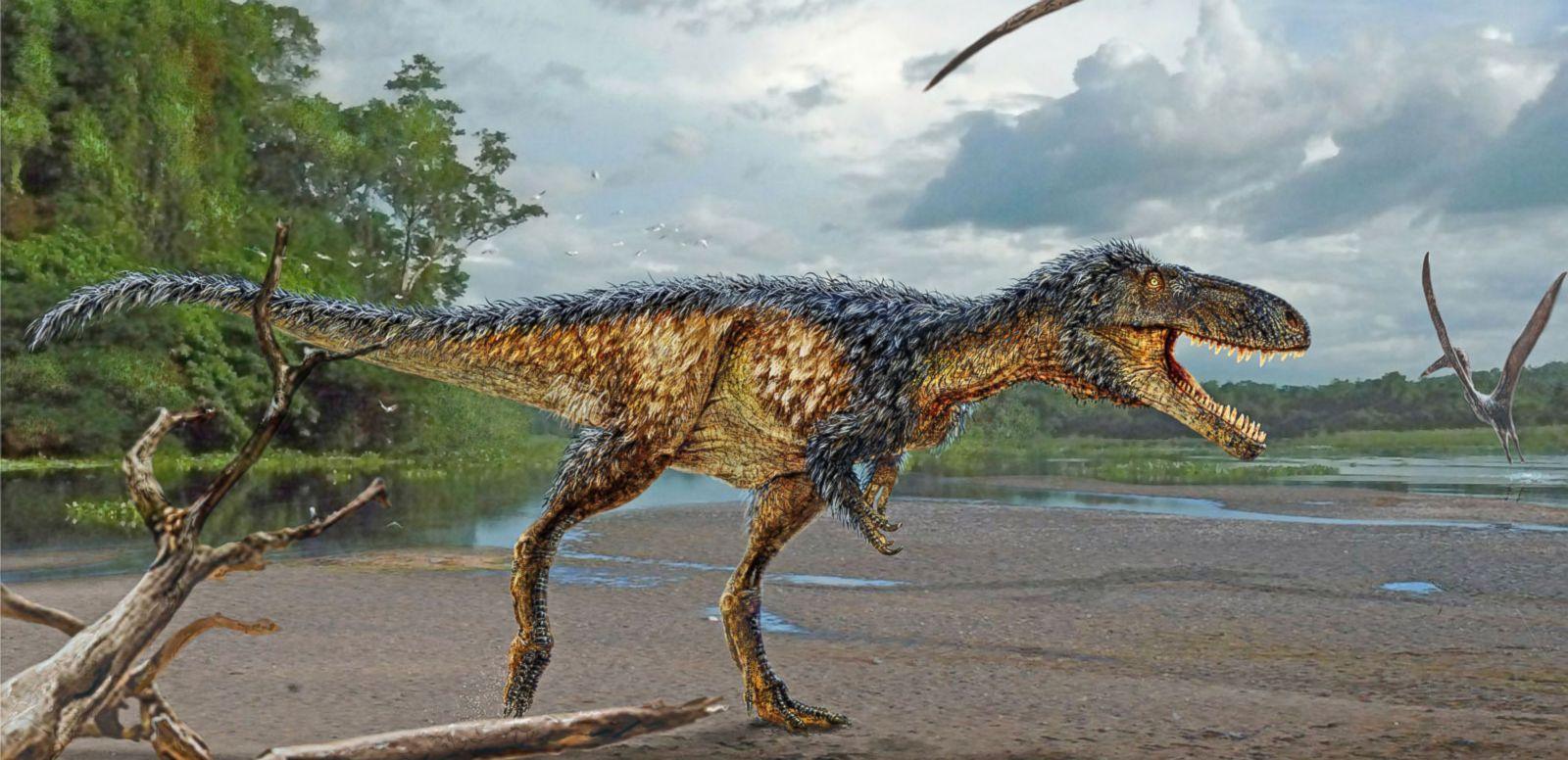 VIDEO: New Tyrannosaur Species Announced