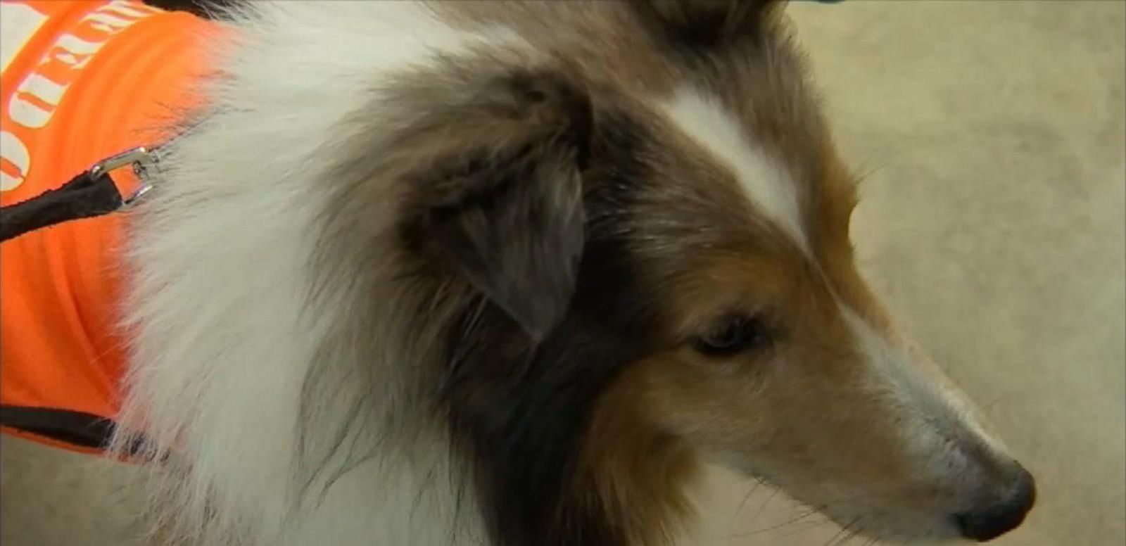 "The dog has since made a ""miraculous"" recovery, his owner told ABC News."