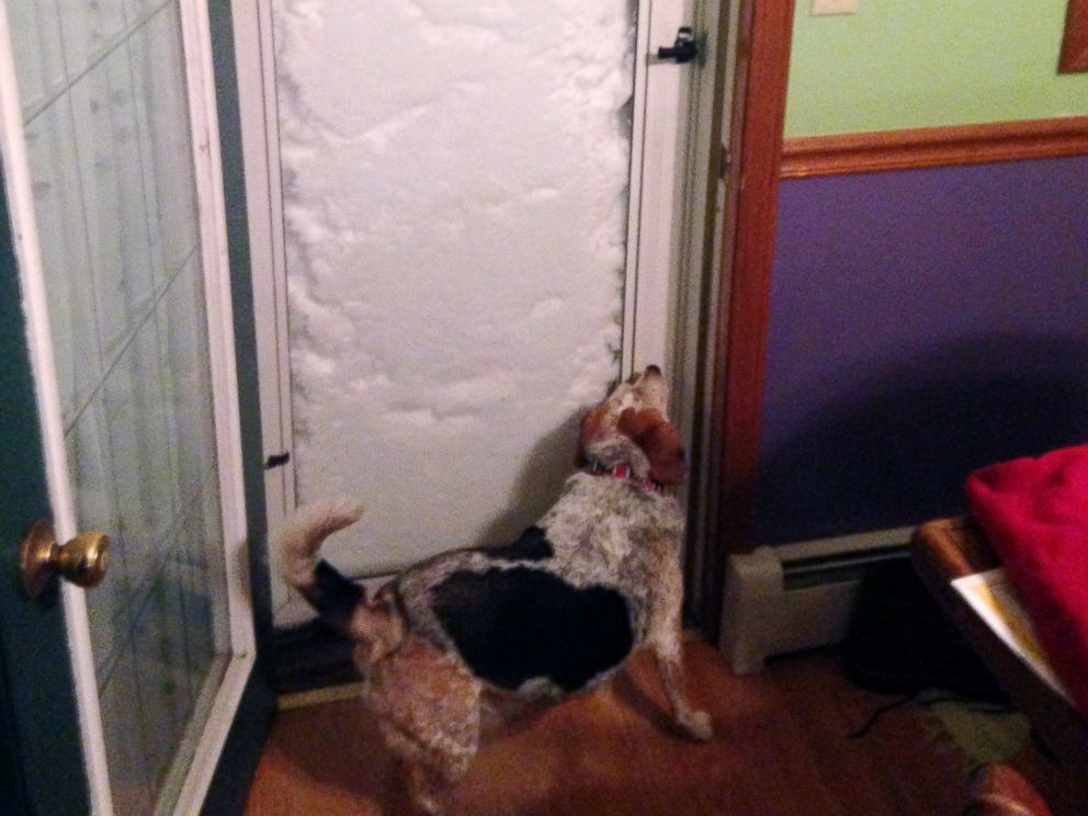 PHOTO: In this photo provided by Patrick Bryne, his dog, Bonnie, sniffs a door blocked with snow, Nov. 18, 2014, in South Buffalo, N.Y.