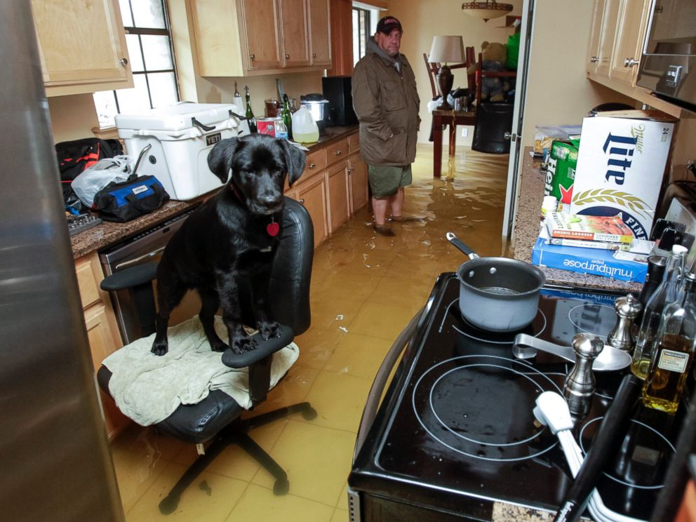 PHOTO: Rowdy the dog finds refuge on an office chair in Harvey Cooks flooded home in Hammond, La., March 11, 2016, after heavy rains caused low areas to flood.