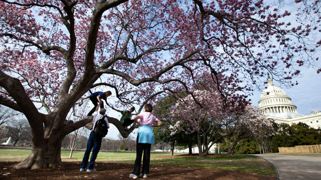 PHOTO: The Stidman family, Fil, Anna, and their daughters Laura, back left, and Sarah, of Raleigh, N.C. enjoy the warm Washington weather underneath a blooming magnolia tree on the Capitol grounds, March 12, 2012.