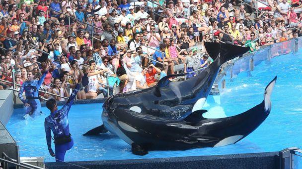 http://a.abcnews.go.com/images/US/GTY_Killer_Whales_MEM_151009_16x9_608.jpg