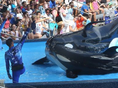 PHOTO: SeaWorld is heavily emphasizing conservation amid controversy over its killer whales.
