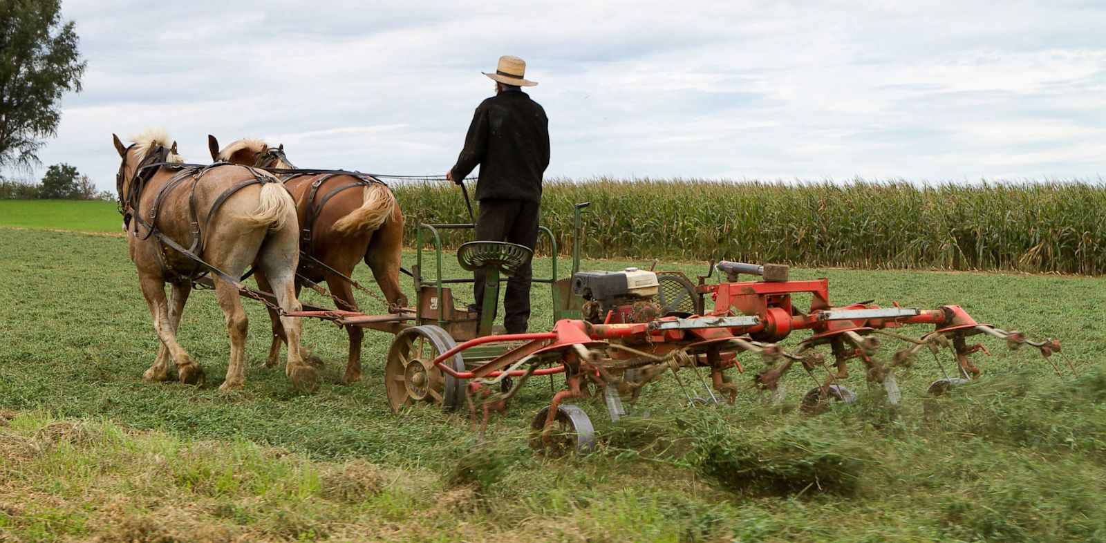 PHOTO: Amish Farmer