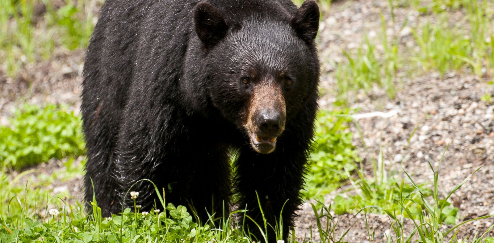 PHOTO: Darsh Patel, 22, of Edison, was fatally mauled by a bear late Sunday afternoon in West Milford, NJaccording to authorities.