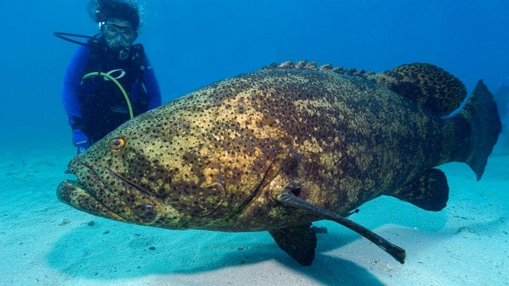 Grouper dating philadelphia