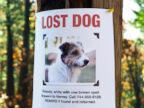 PHOTO: A new app helps pet owners find lost animals through facial recognition.