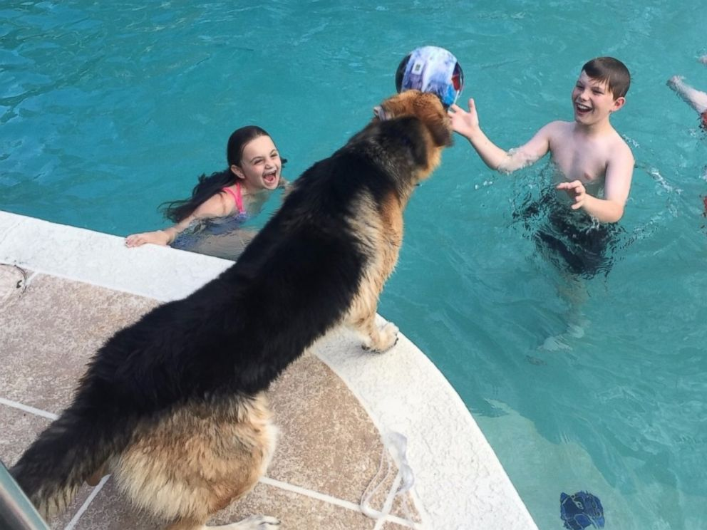 PHOTO:Molly plays in the DeLuca family pool while Haus watches.