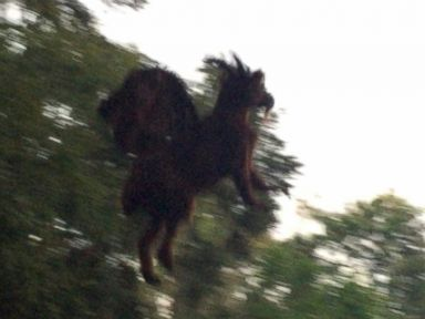 PHOTO: New Jersey Resident David Black said he photographed what he believes was a mythical creature.