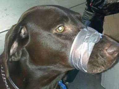 PHOTO: A photo of a dogs mouth duct taped shut was allegedly posted on Facebook, sparking a police investigation.