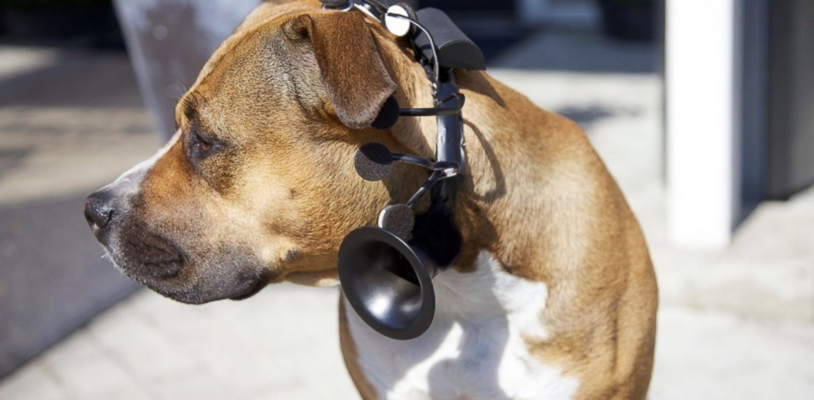PHOTO: No More Woof headset translated canine thoughts into words.