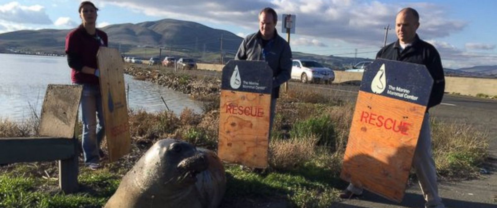 PHOTO: The California Highway Patrol posted a picture on Twitter, Dec. 28, 2015, of an elephant seal that blocked traffic on SR 37E/SR 121.