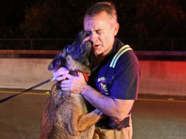 PHOTO: A dog rescued from floodwaters under the Eldorado Parkway Bridge in McKinney, Texas on Nov. 27, 2015, licks the face of a rescuer.