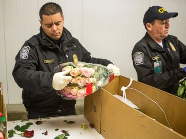 PHOTO: U.S. Customs and Border Protection Agricultural Specialists inspect imported flowers, ahead of Valentines Day, in Miami, Feb. 10, 2016.