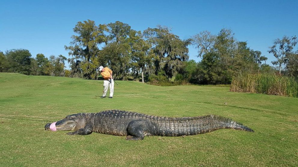... After 'Happy Gilmore' Character Caught on Texas Golf Course - ABC News