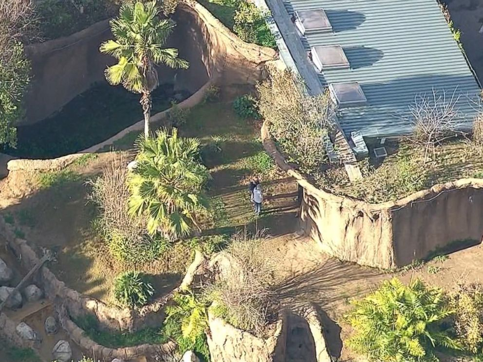 PHOTO: An employee at the Los Angeles Zoo was rescued after falling into the gorilla enclosure, Jan. 21, 2016, fire officials said.