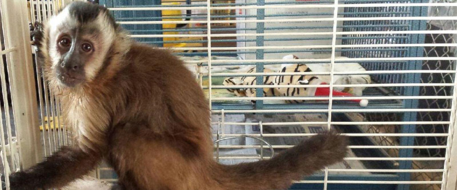PHOTO: A California woman was bitten outside of a pizzeria by capuchin monkey.