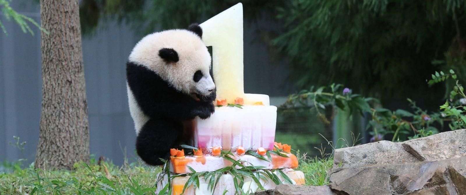 PHOTO: Giant panda Bao Bao celebrates her first birthday at the Smithsonians National Zoo, Aug. 23, 2014.