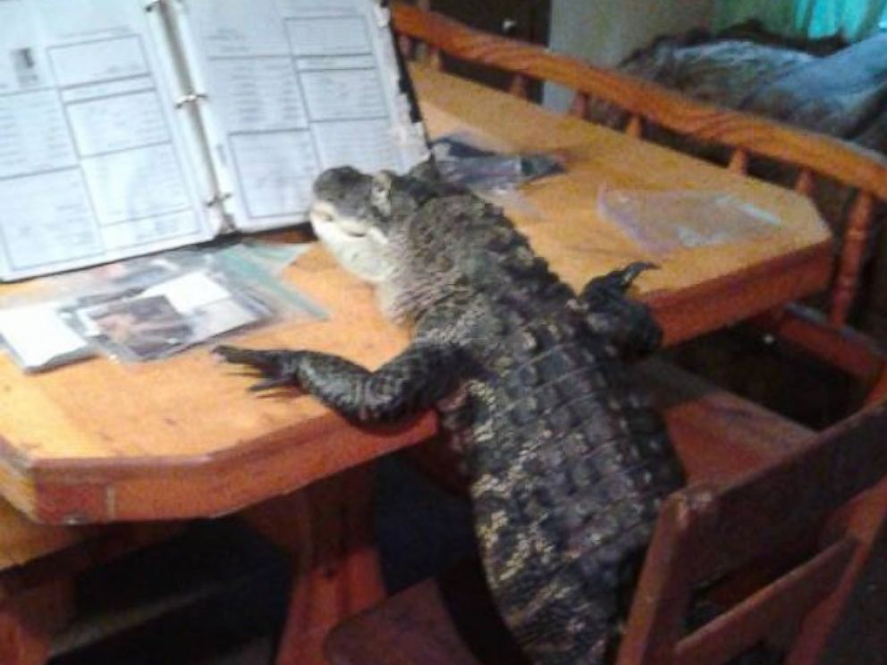 Florida Woman Fights To Keep Her Pet Alligator Who Wears Clothes And Rides Atvs Abc News