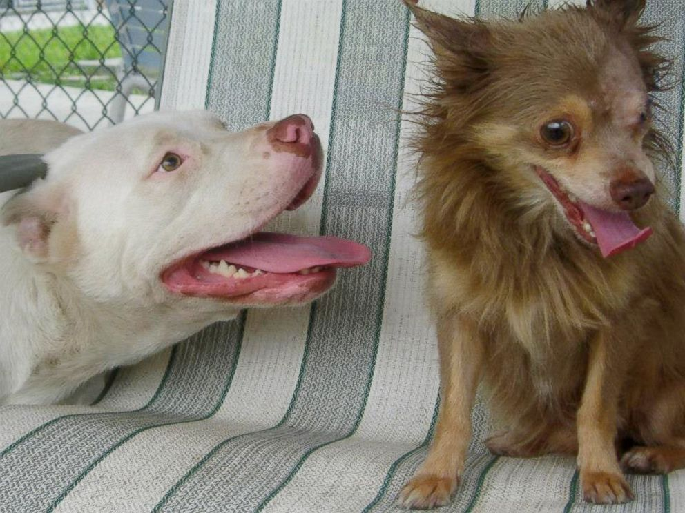 PHOTO: The inseparable duo are now looking for homes – hopefully one – so they can live happily together.