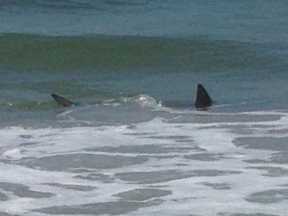 PHOTO: Monta Laughlin Hussey told ABC News that she spotted two sharks swimming in a shallow part of a North Carolina beach just a few miles from where there were twin attacks on Sunday.