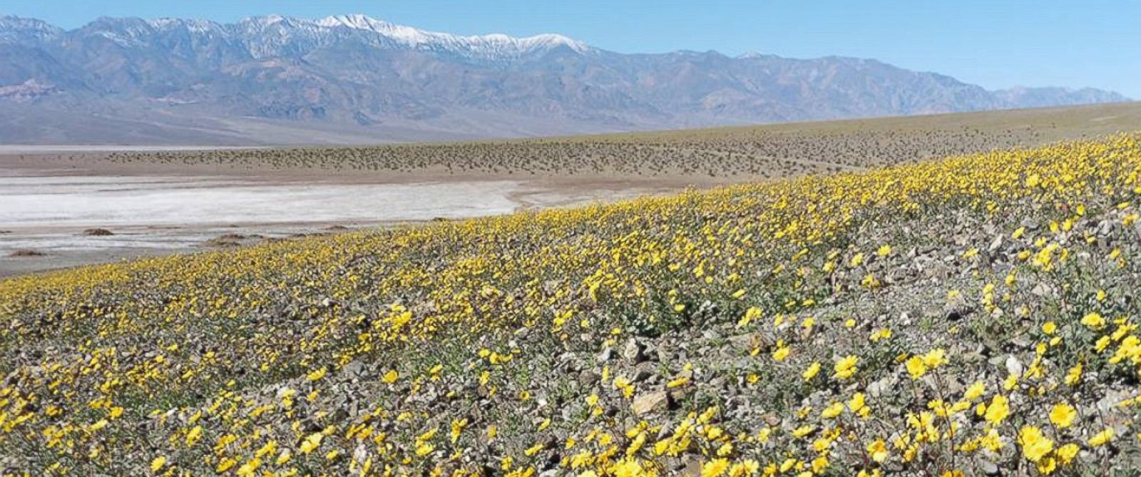 "PHOTO: Death Valley National Park posted this photo to Facebook on Feb. 10, 2016 with the caption, ""Wildflowers meet the salt flats of Badwater Basin."""