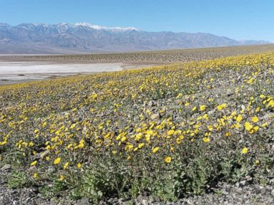 PHOTO: Death Valley National Park posted this photo to Facebook on Feb. 10, 2016 with the caption, Wildflowers meet the salt flats of Badwater Basin.