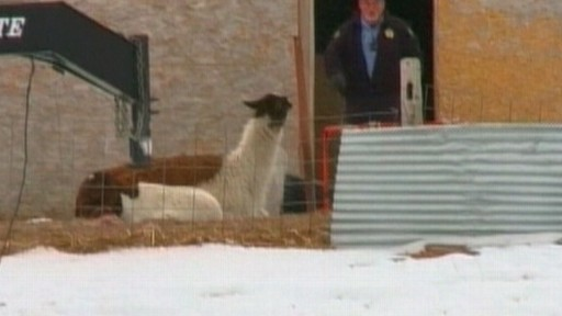 Video: Denver police say the death of a dozen animals may be linked to a divorce dispute.