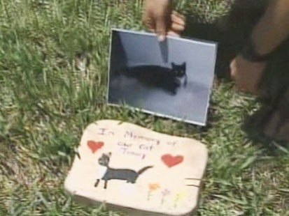 Video: Police search for serial cat killer.