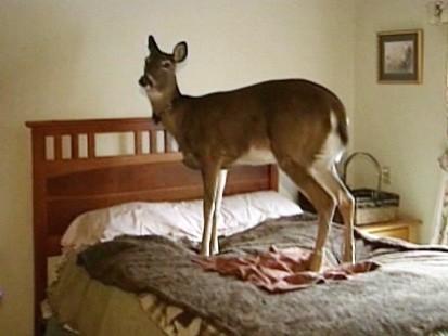 VIDEO: Family has a pet deer