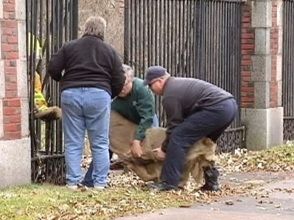Video: Deer stuck in between two railings rescued.