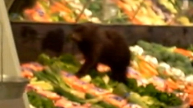 VIDEO: Shoppers got more than they bargained for at an Alaska grocery store.