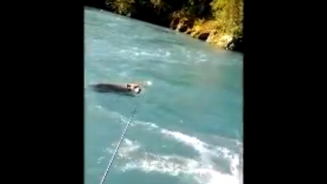 VIDEO: Mike Polocz and his son used a net to push struggling cub out of Kenai Rivers current.