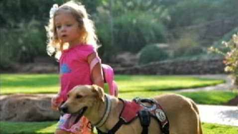 abc faith wilson diabetic alert dog jt 120602 wblog Diabetic Alert Dog Saves 3 Year Old Girls Life Countless Times