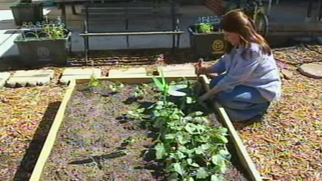 PHOTO:When Julie Bass front yard was torn up after replacing a sewer line she put in a vegetable garden.