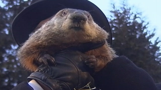 "PHOTO: An early spring is on the way, according to groundhog ""Punxsutawney Phil."" When the Pennsylvania groundhog emerged from his dwelling at Gobblers Knob on Feb 2, 2013, he did not see his shadow."