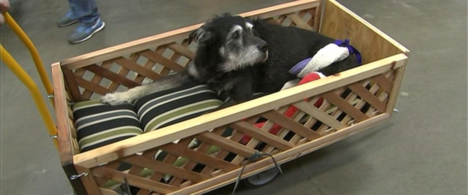 PHOTO: Ike is seen in a cart that was custom-built by two Home Depot employees.