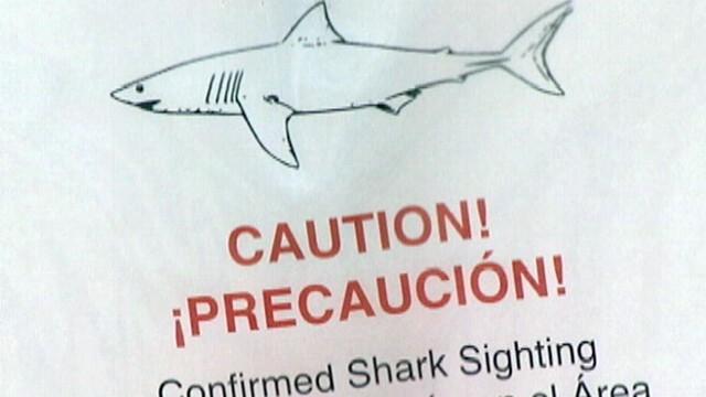 VIDEO: Shark Sighting at Santa Barbara, California Beach