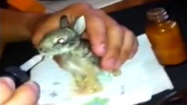 VIDEO: Joshua Bisnar bottle fed four bunnies for two months before placing them in a wildlife refuge.